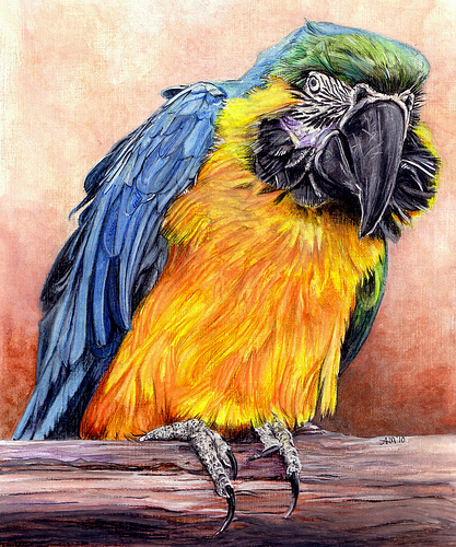 Drawn parakeet colour pencil Drawings Colored pencil pencil Me