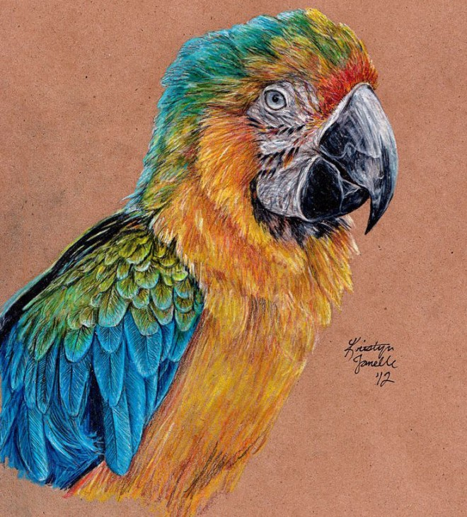 Drawn parakeet colour pencil Your Art inspiration Bird and