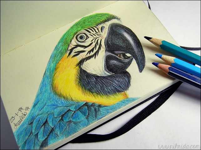 Drawn parakeet colour pencil Drawing Pencil  Parrot Colour