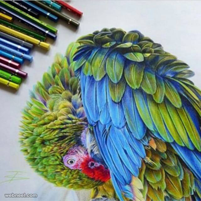 Drawn parakeet colour pencil Tattootatiana by tattootatiana by color