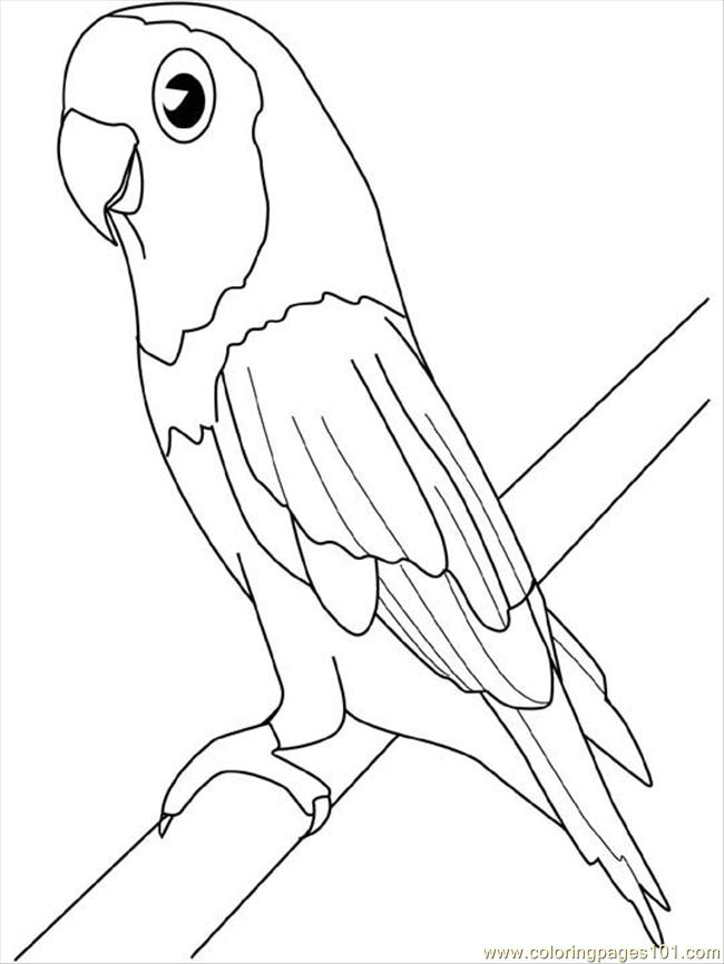 Drawn parakeet colouring page Coloring Pages Parakeet Parrots Coloring