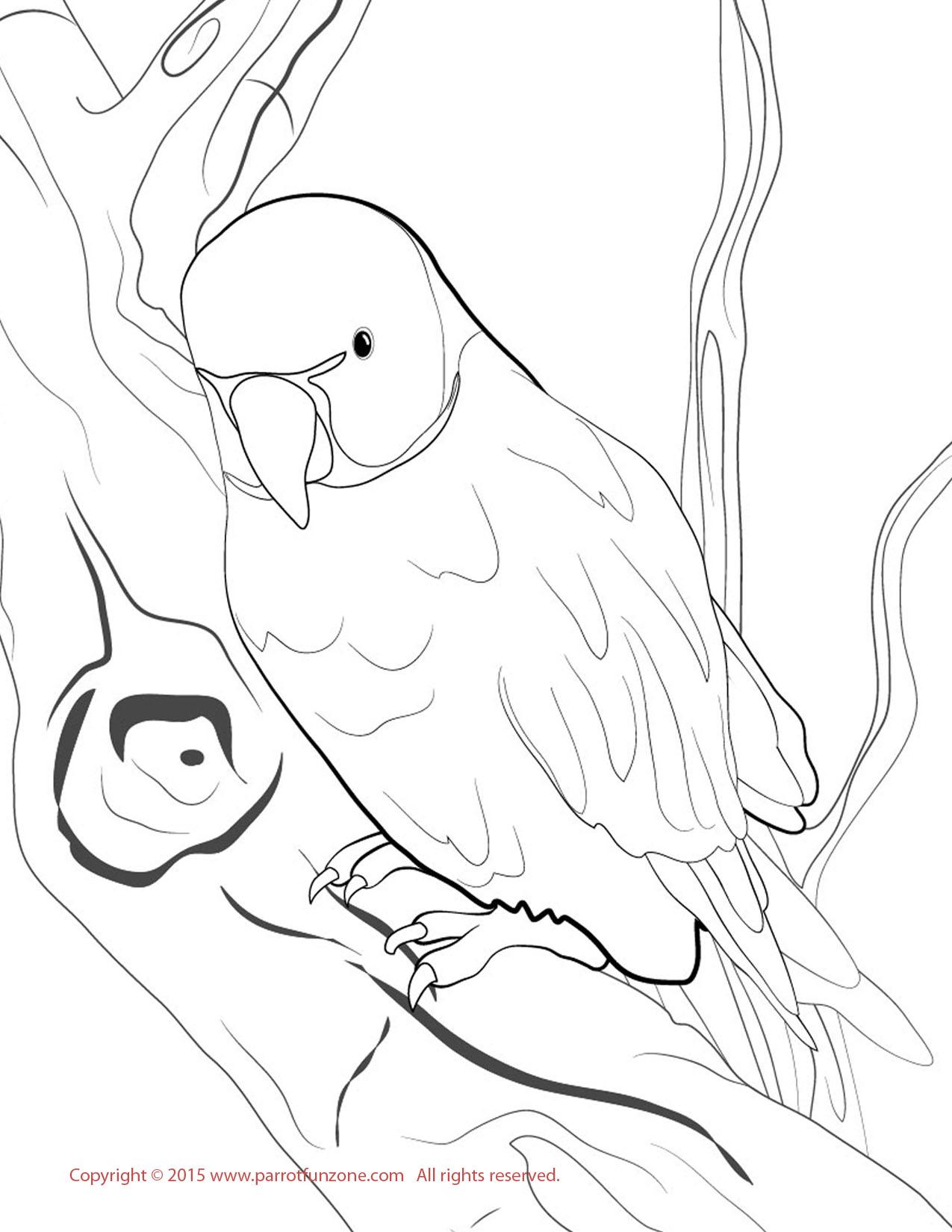 Drawn parakeet colouring page Ringneck parakeet coloring page Ring