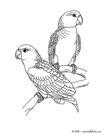 Drawn parakeet colouring page Bird church Coloring  Parrot