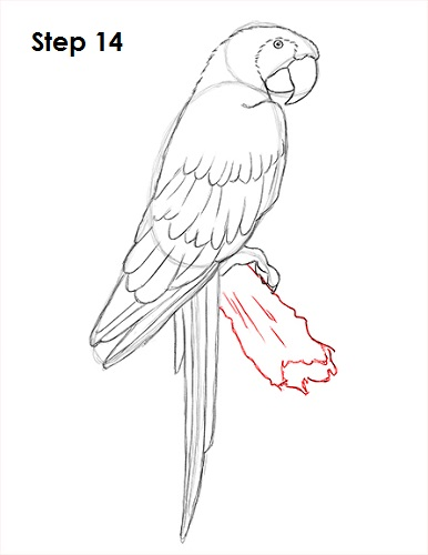 Scarlet Macaw clipart drawing #11