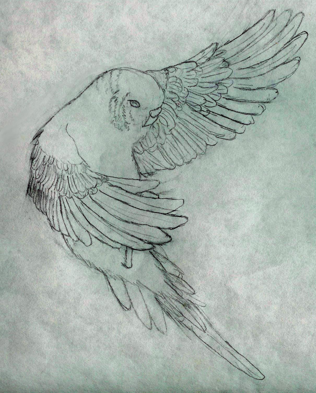 Drawn parakeet tattoos Glinadaro Glinadaro Flying by Flying