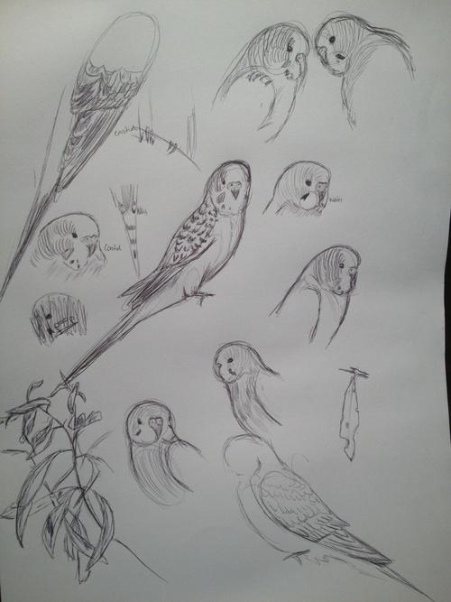 Drawn parakeet tattoos Images cute! Parakeet Tattoo 23