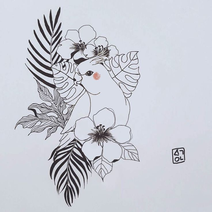 Drawn parakeet tattoos Tattoo Pinterest #drawing  #haeyum