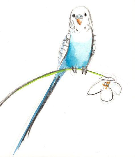 Drawn parakeet tattoos Best Donna Parakeet images on