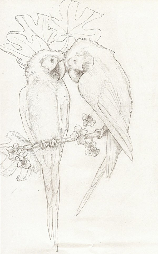 Drawn parakeet tattoos Attractive design by Parrot Designs