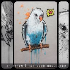 Drawn parakeet tattoos Tattoo Tattoo Tattoo Tattoos for