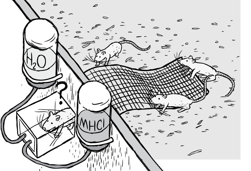Drawn rat famous Addiction transparent rat of of