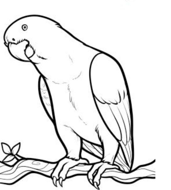 Drawn parrot #11