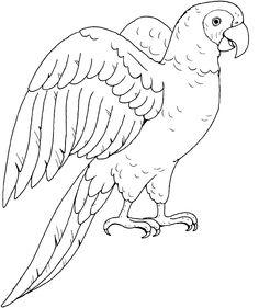Drawn parrot #15