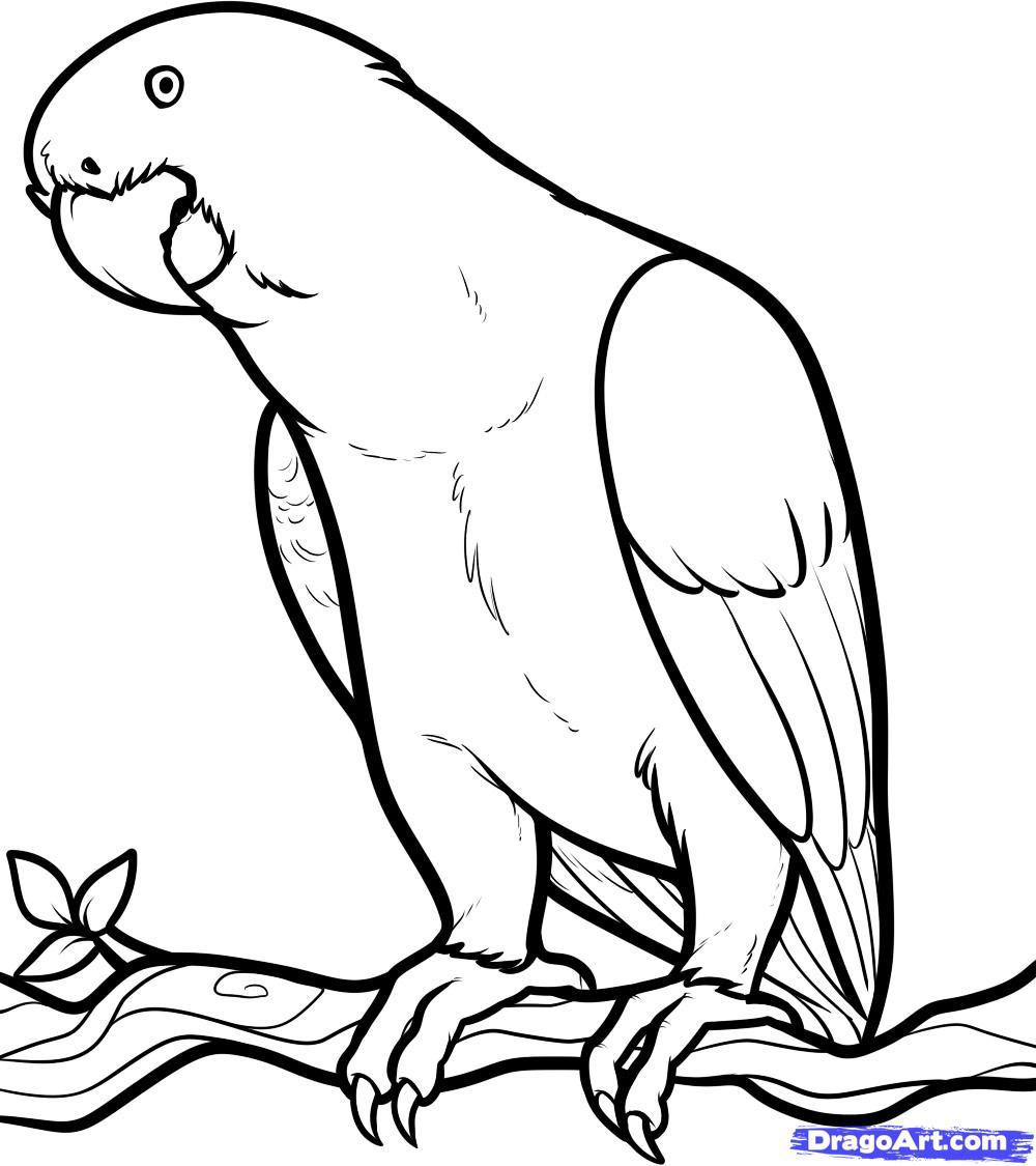 Drawn parrot #8