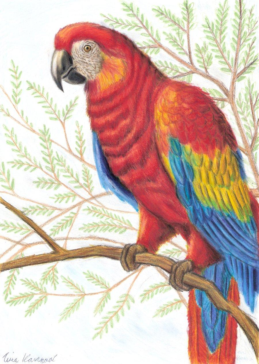 Drawn parrot #7