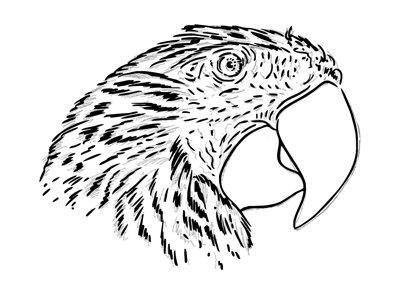 Drawn parrot #14