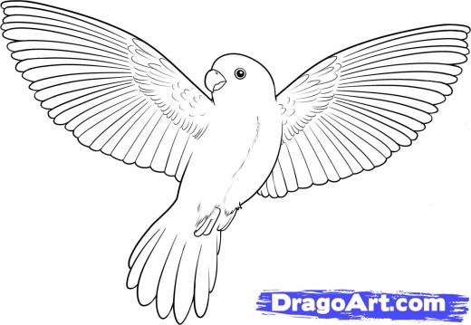 Drawn parrot bird fly Line pigeon photo#18 drawing Flying