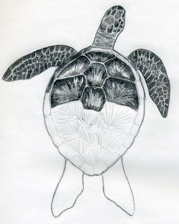 Drawn island easy Turtle Animals Pinterest > Drawing