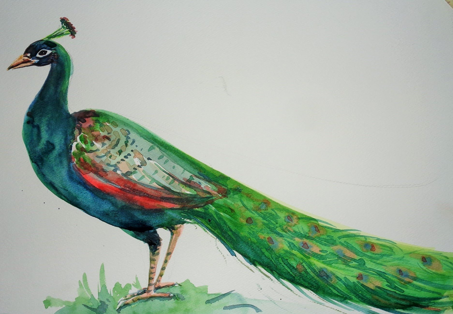 Drawn peacock Kids a By How For