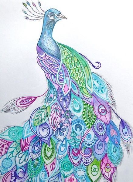 Drawn peacock Drawing Rachel Best Art Peacock