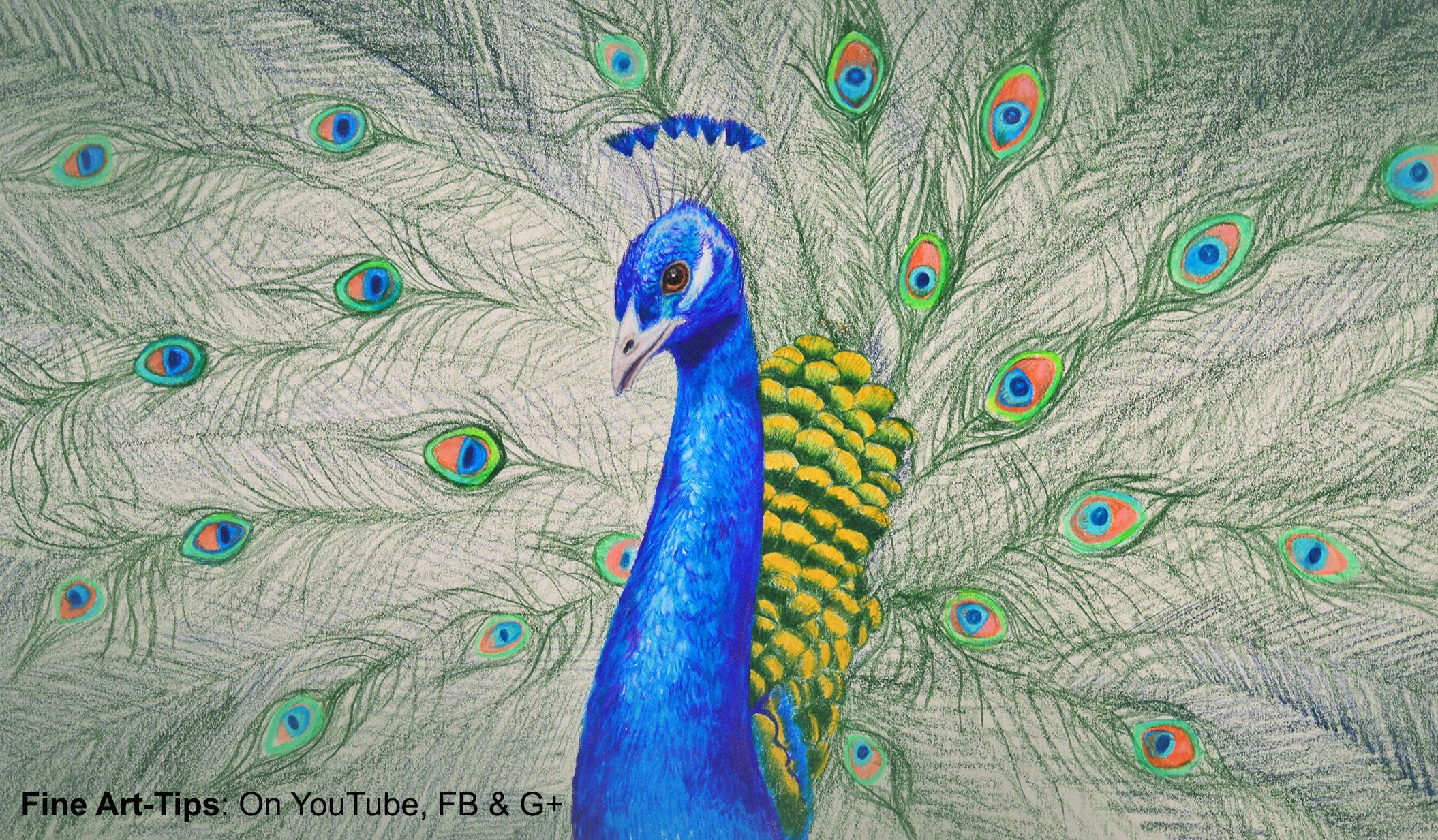 Drawn peacock With and Peacock Pencils to