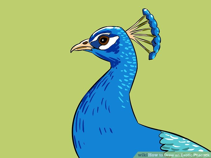 Drawn peacock To Exotic 26 titled Ways