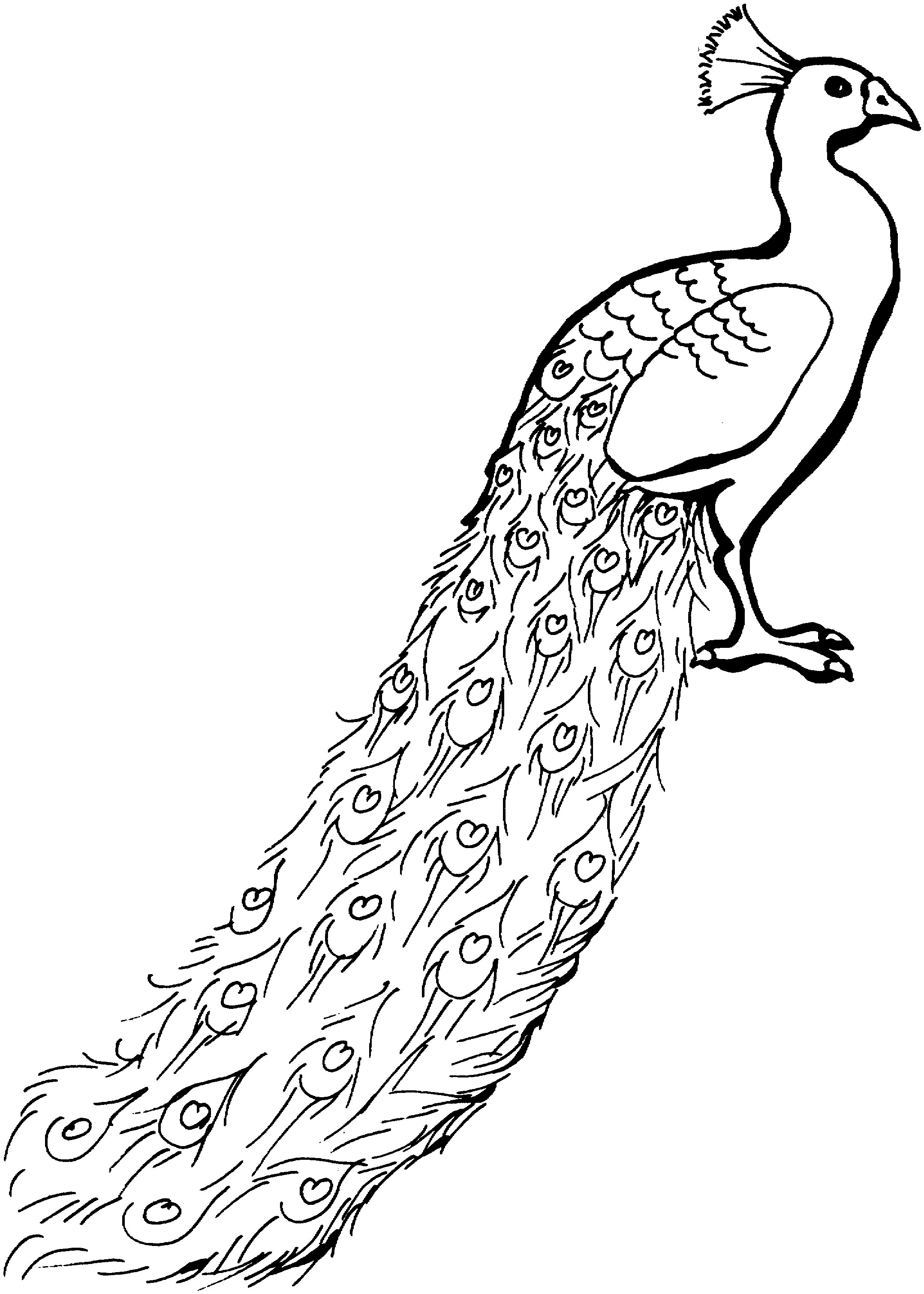 Drawn peacock coloring page Pages Coloring Full Pages coloring