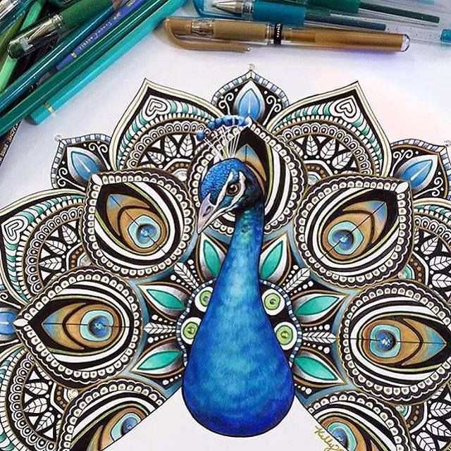 Drawn peacock colour full Inspiration ideas 25+ Best and