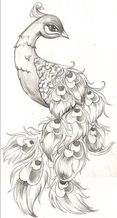 Drawn peacock cute animal Search white Google only 25+