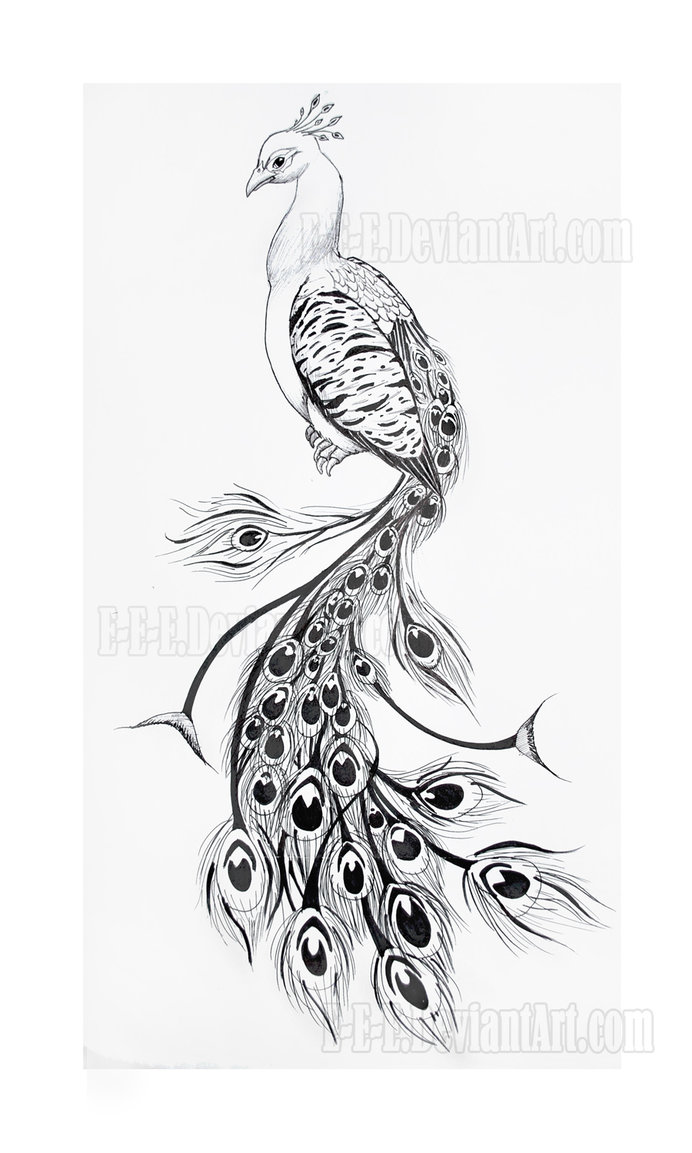 Drawn peacock peacock tail Https://s ak0   media