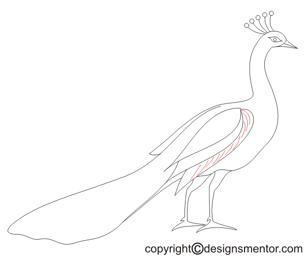 Drawn peacock graphic design Simple by Draw method to