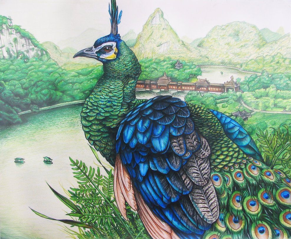 Drawn peafowl By Peafowl by on Peafowl