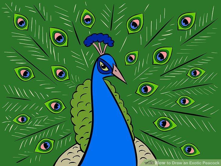 Drawn peafowl Draw Step titled Draw 4