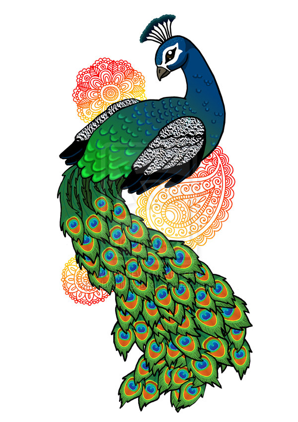 Drawn peacock colour full Images galleries < Drawing Drawing