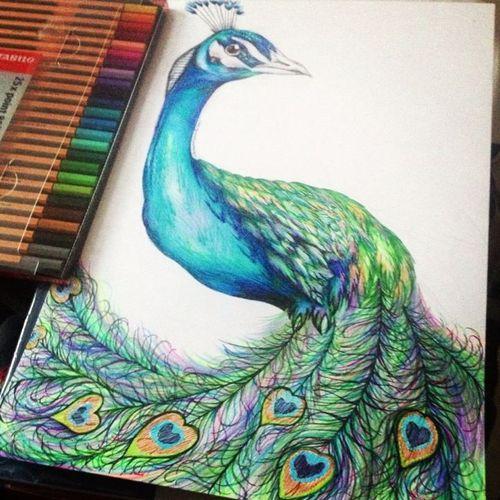 Drawn peafowl Peacocks this! Wish I I