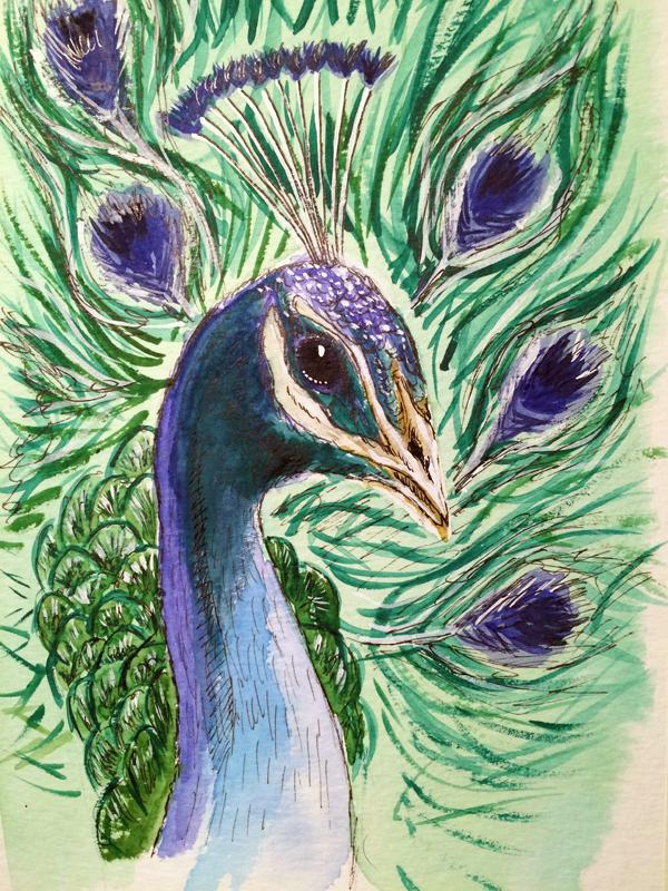 Drawn peafowl 4 July of a Bird