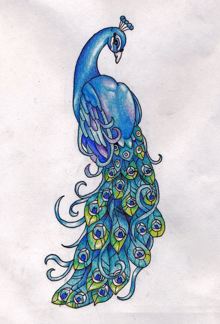Drawn peafowl About +++BIRDS this Pin 288
