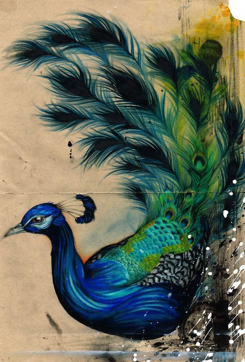 Drawn peafowl artistic Pin on 182 images Find