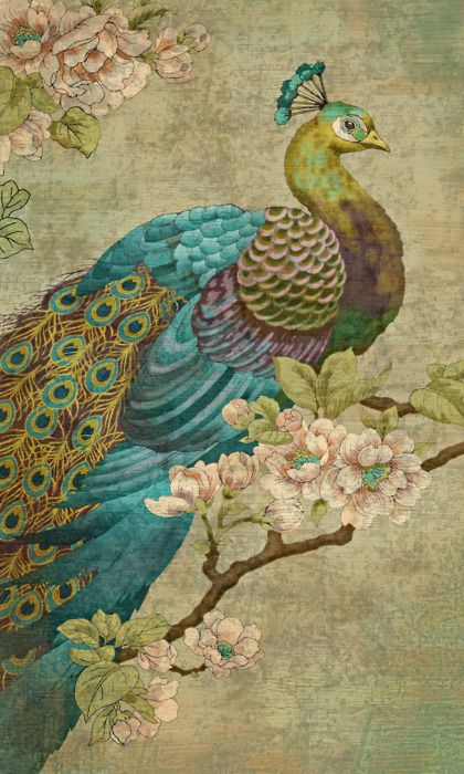 Drawn peafowl artistic Pin on 40 images Find
