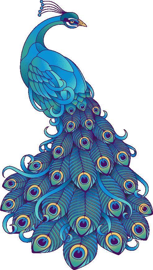 Drawn peafowl artistic GALORE on best ideas CLIP