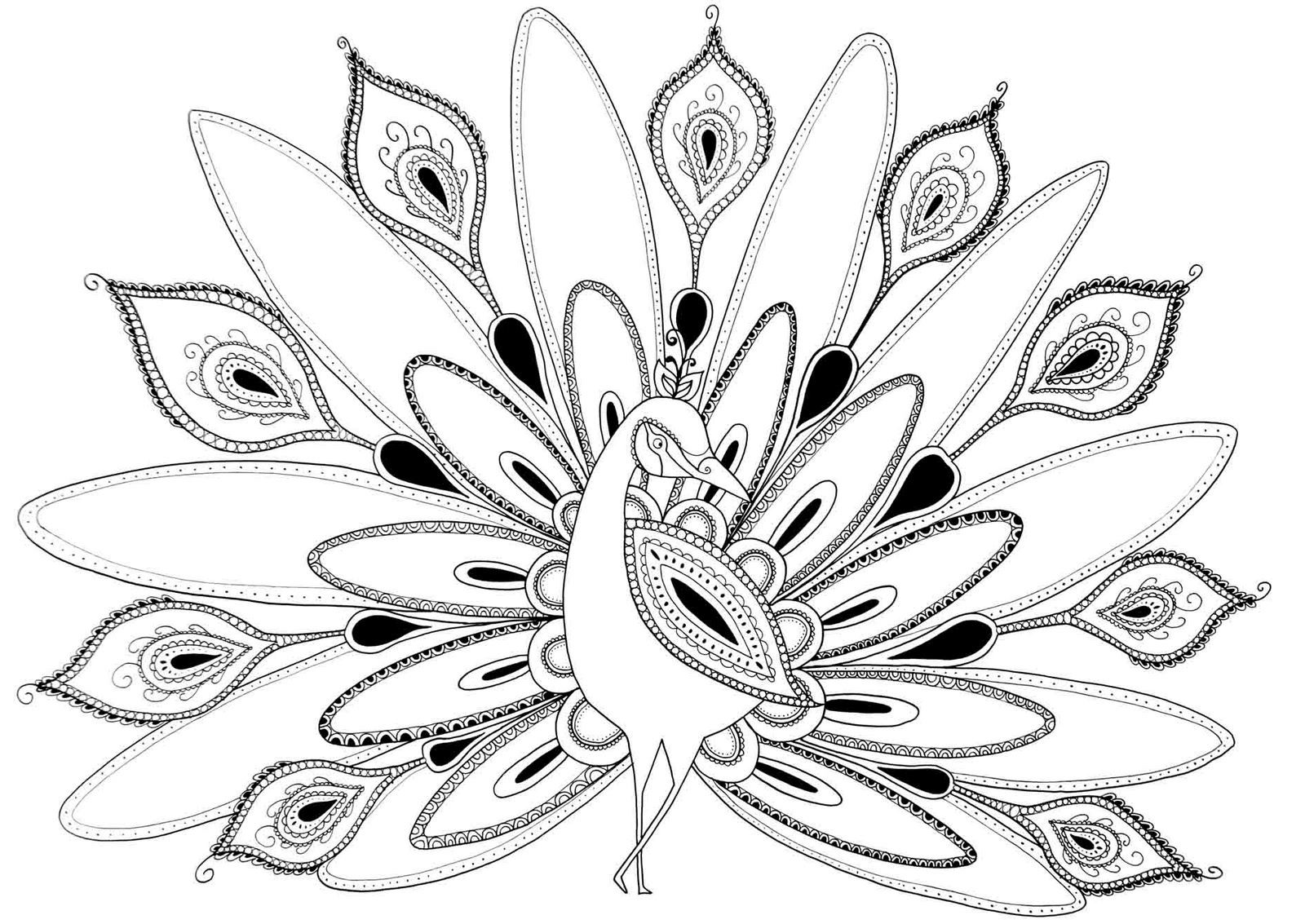 Drawn peacock coloring page Images Peacock 6 Peacocks Coloring