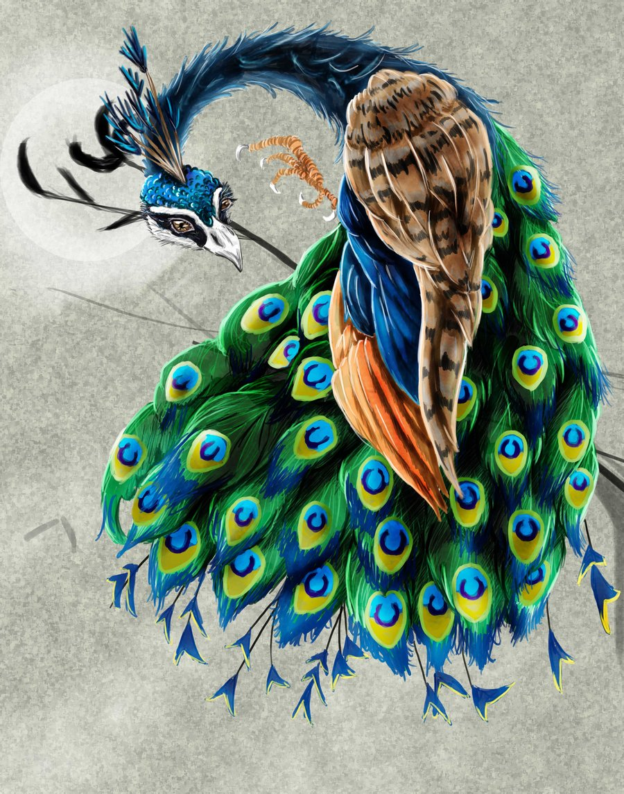 Drawn peacock colour full Art peacock digital Art amalgem