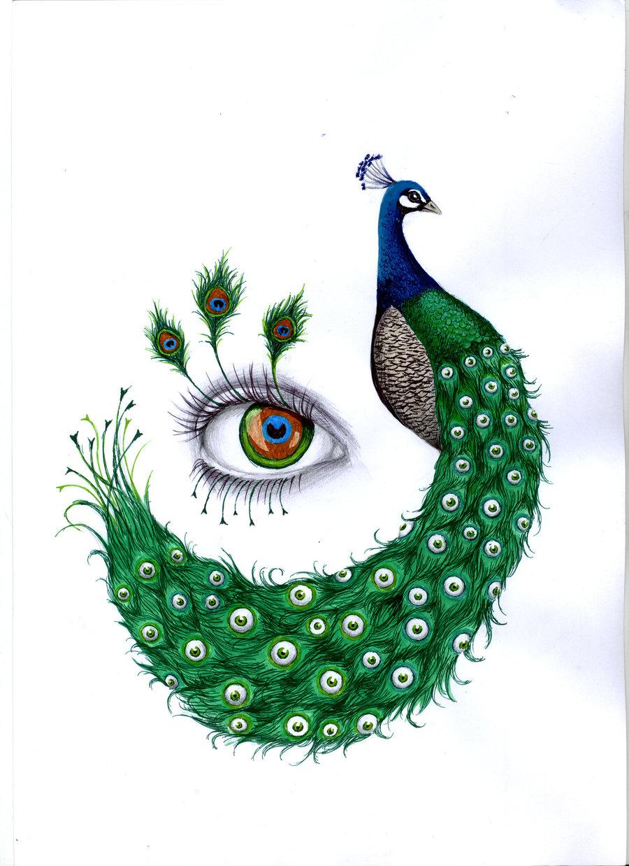 Drawn peafowl creative eye This more Find ~LaChauveSourisDoree Illustration