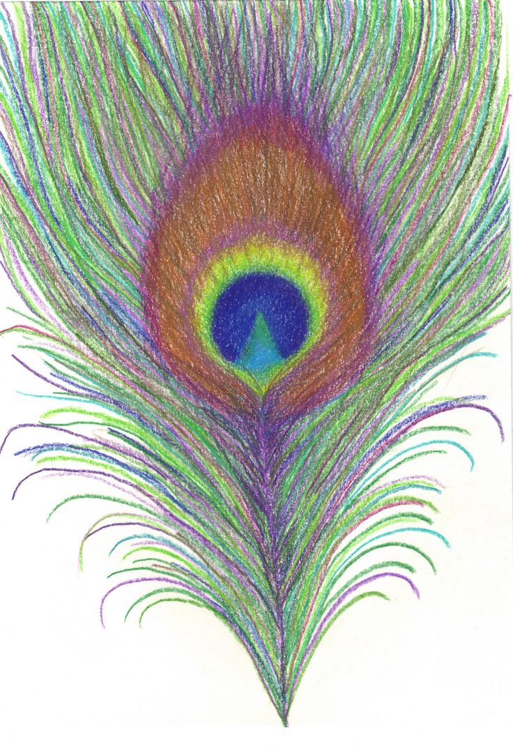 Drawn peafowl creative eye Pinterest this more Find images