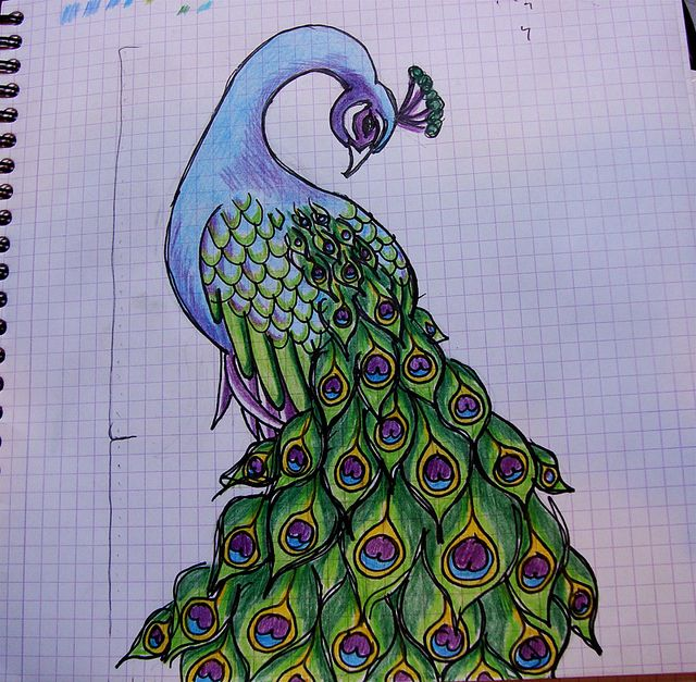 Drawn peacock mor #2