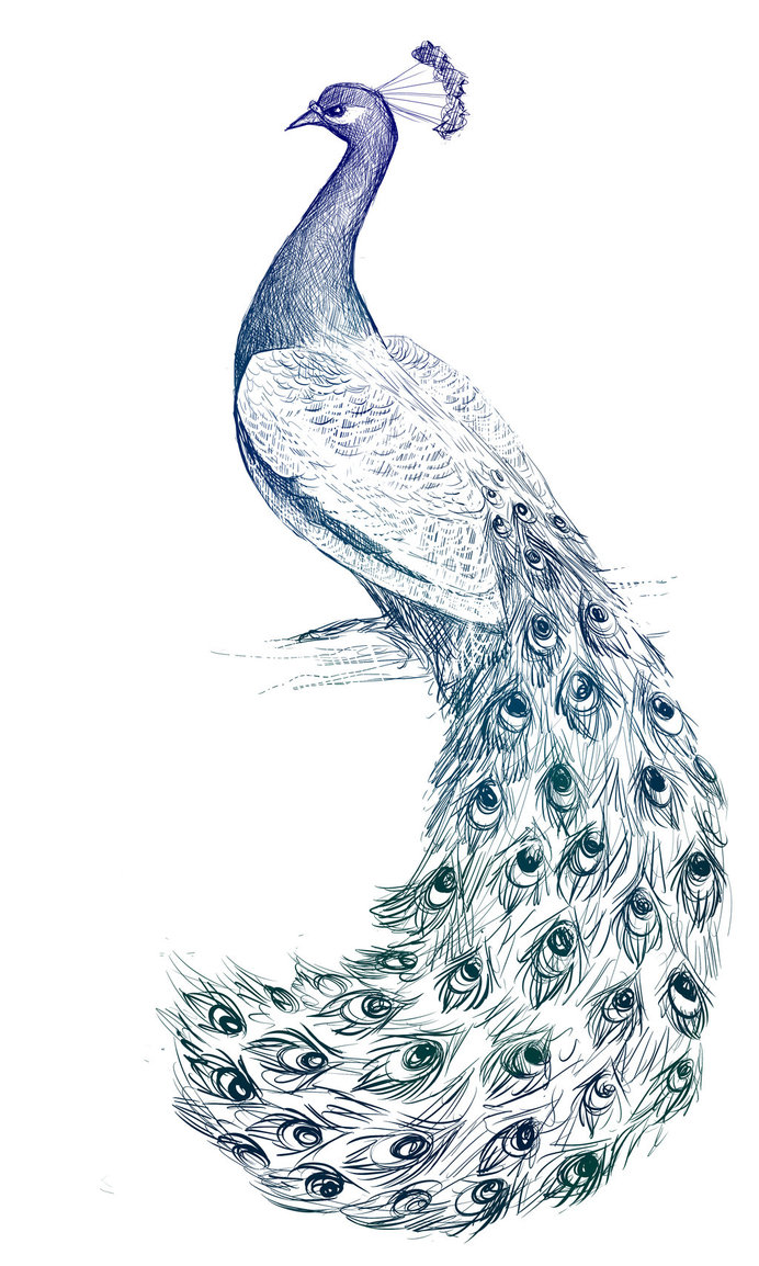 Drawn peacock peacock tail Drawings … by Hand DeviantArt
