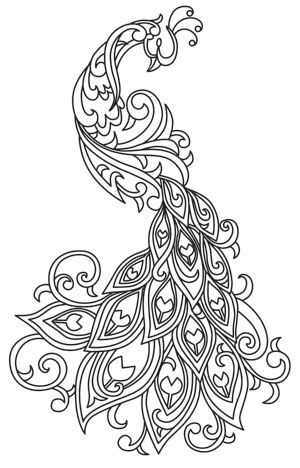 Peacock clipart free hand drawing 25+ ideas this more Animals