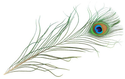 Peacock clipart easy draw Free Clip Clip Feather Peacock