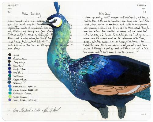 Drawn peafowl peafowl And Residency of Bermuda Green