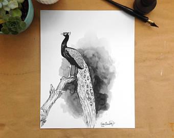 Drawn peafowl pen Ink drawing Proud Pen Art